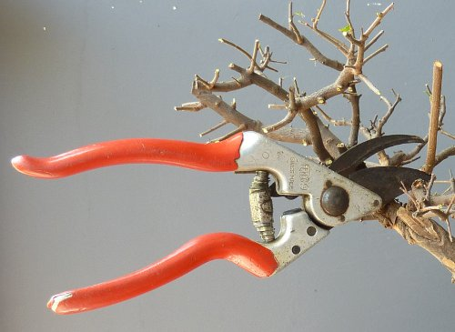 Secateurs and pruners for Gardening tools secateurs