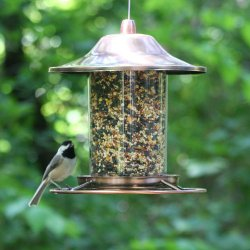 Perky Pet Copper Panorama Bird Feeder in use