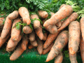 Which are the Easiest Fruits and Vegetables to Grow?