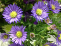 5 Beautiful Flowers You Can Plant Around Your Garden