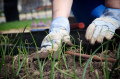 6 Tips For Successful Gardening
