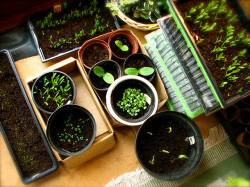 mixed-home-grown-seedlings