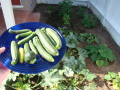 Why Organic Gardening Is Better Than Conventional