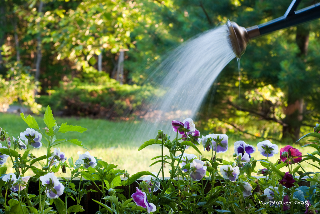 5 tips on conserving water when gardening for Liquid garden